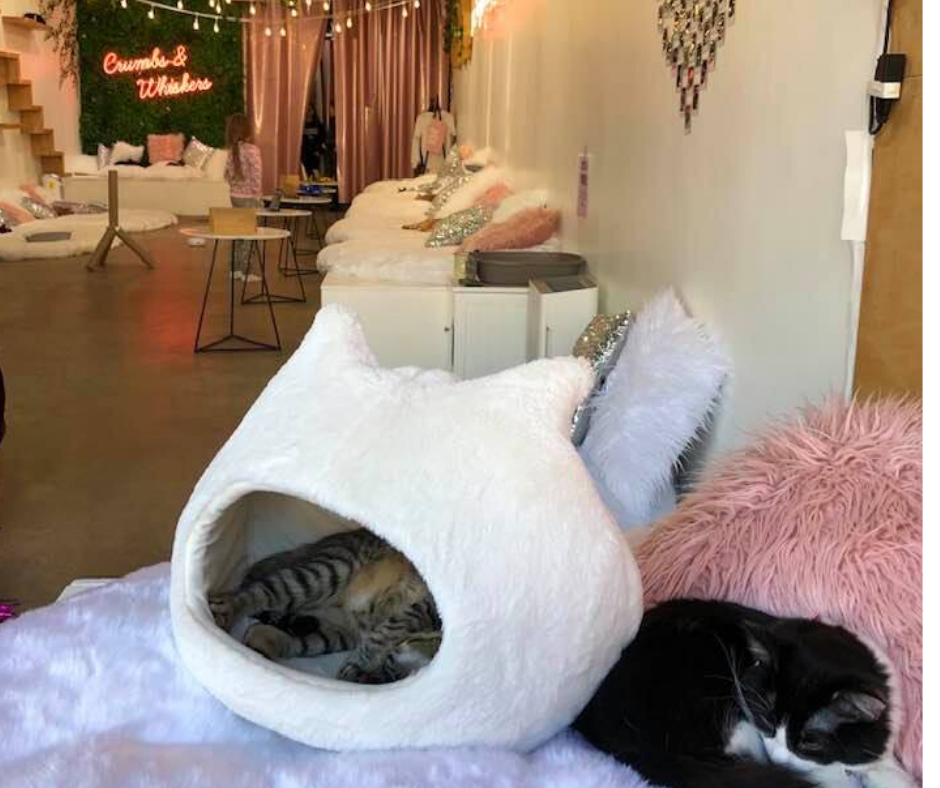 Whiskers Cat Cafe Location
