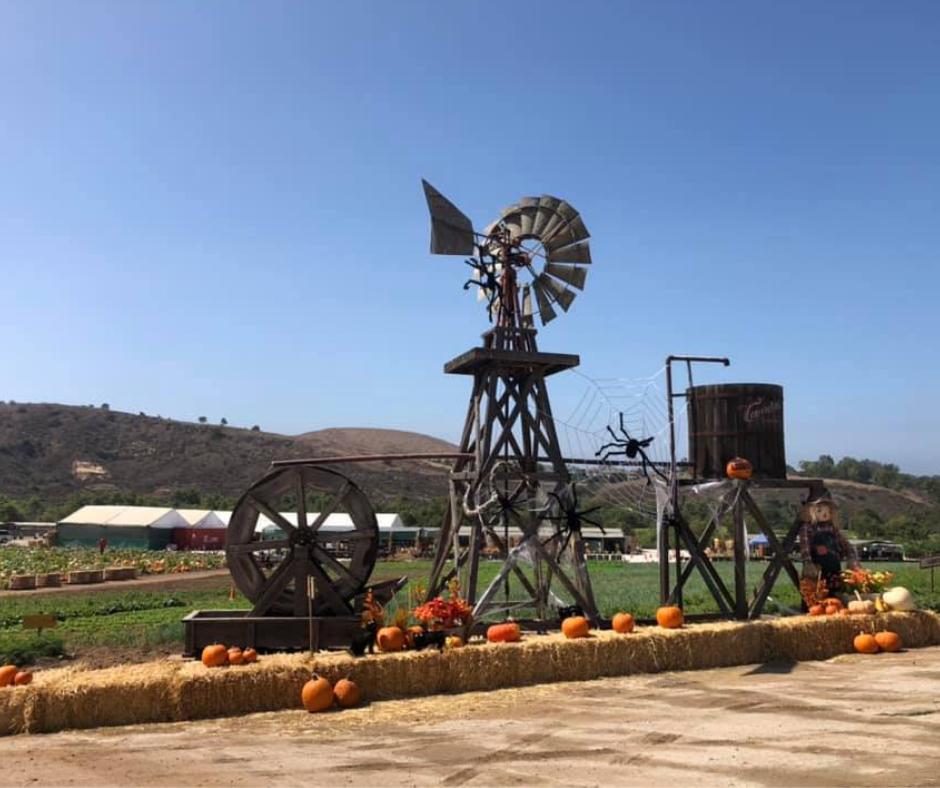 tanaka farm pumpkin patch